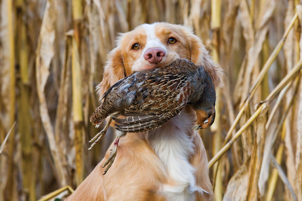 white and tan dog with bird