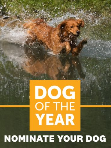 Dog of the Year 2018 Contest