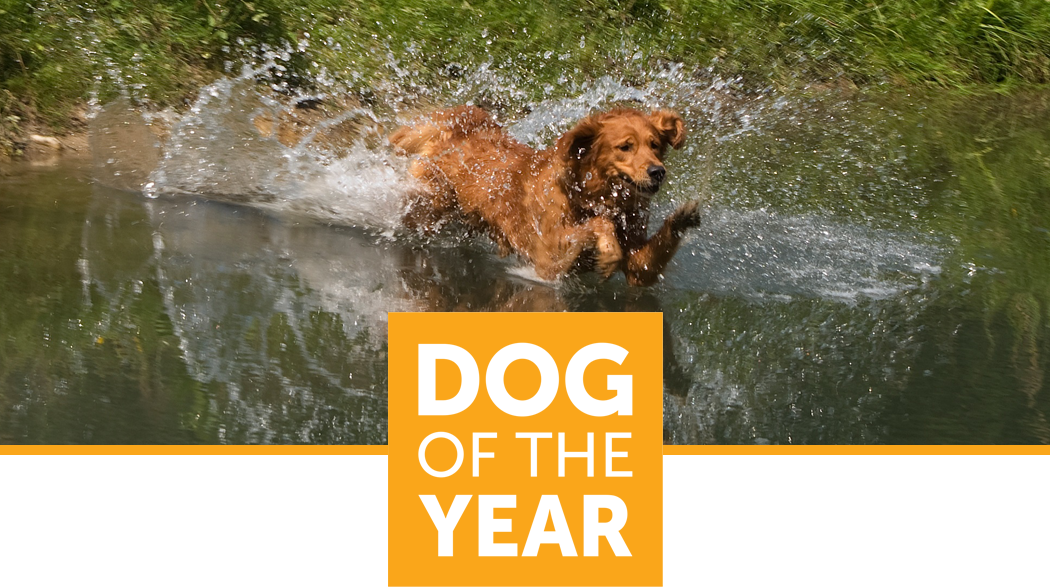 Dog of the Year