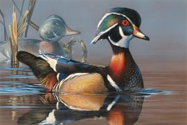 Storm Wins Duck Stamp Contest