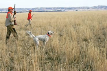 Hunting Over Others' Dogs
