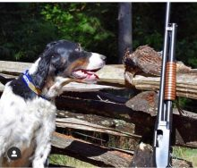 Alder dog with a model 12 I restored.