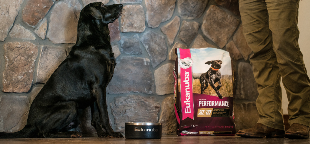 Black Lab being fed Eukanuba Premium Performance