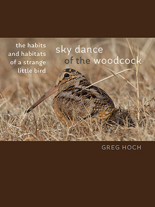 Sky Dance of the Woodcock