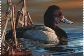 Federal Duck Stamp Winner Announced
