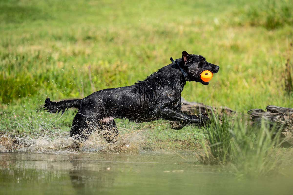 On-hot-days,-cutting-water-helps-dogs-stay-cool.-web