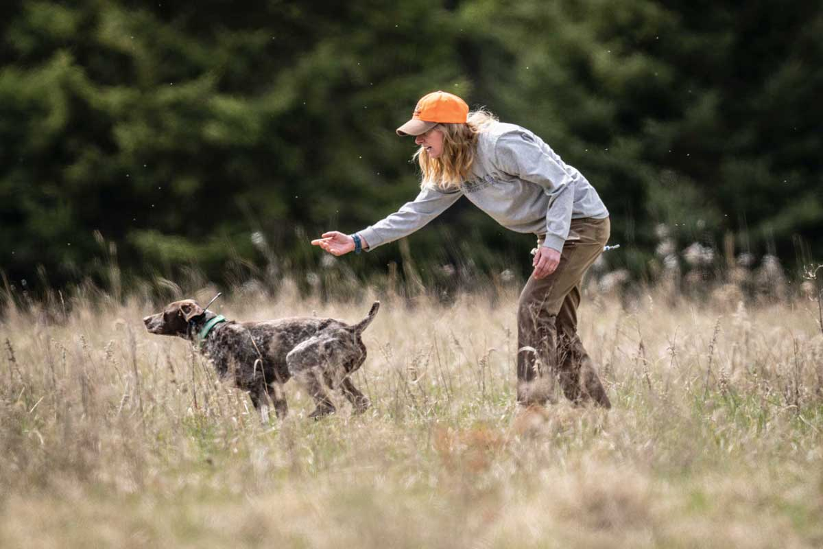 Vary your training routine to help your dog stay focused and challenged.