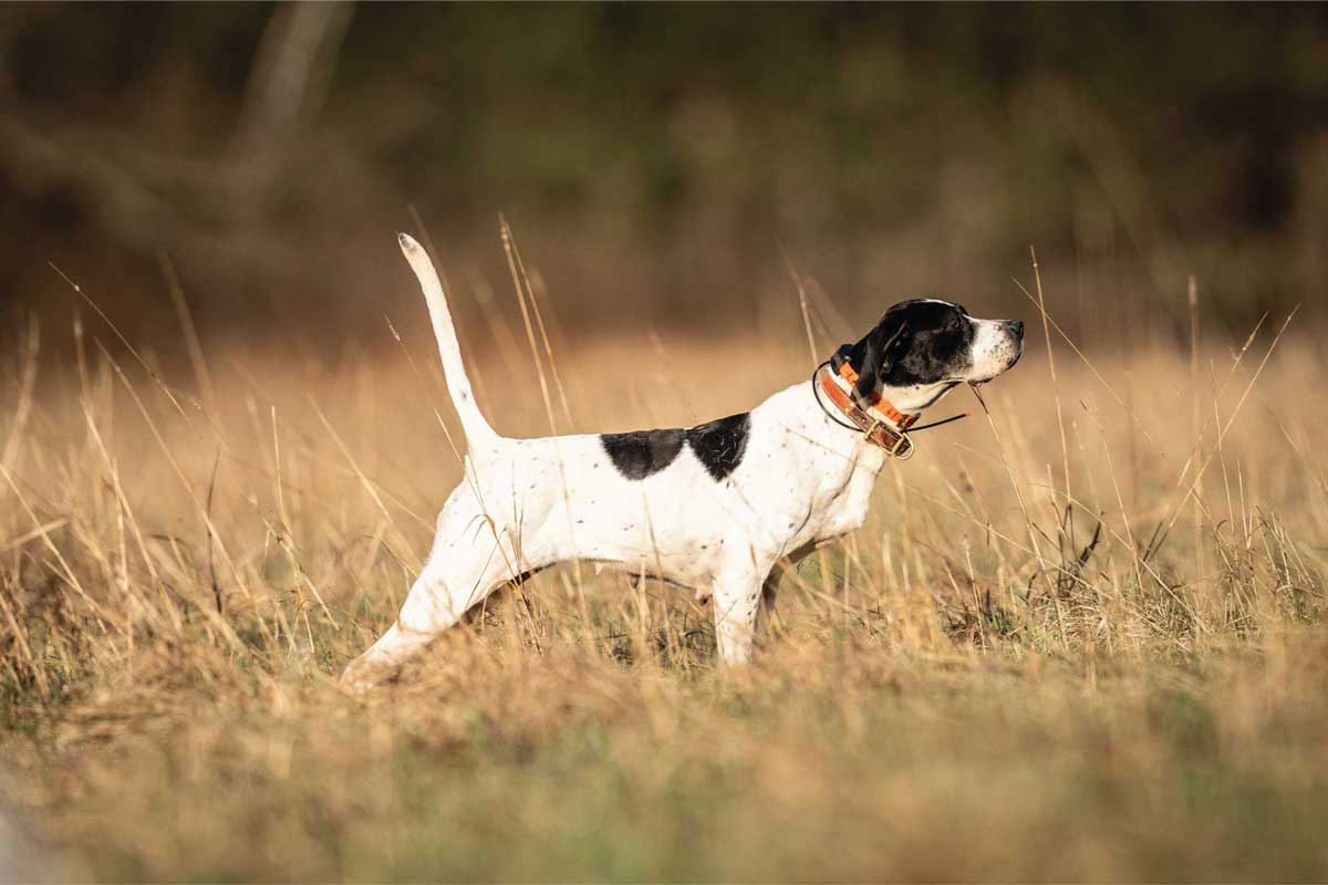 Assess your dog's body condition and diet