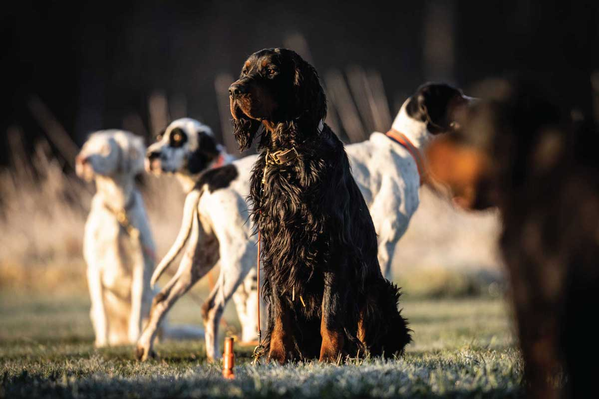 Even well-trained dogs can come unglued during the excitement of hunting season. Take a break to help them calm down